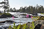 Great Lappland Landschaft Sommer © Great Lappland